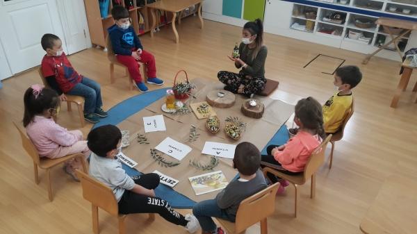 Montessori Çalışmaları Zeytin Projesi